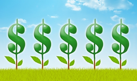 money tree: Money garden with dollar plants