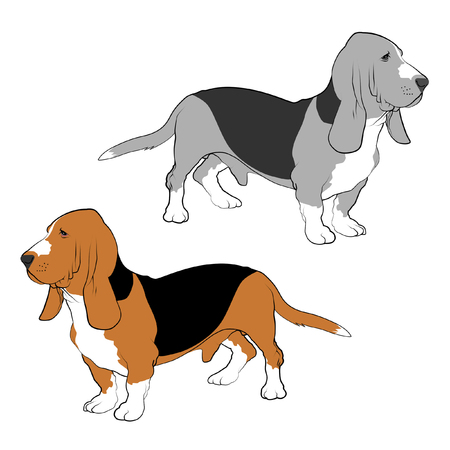 Basset Hound line drawings.
