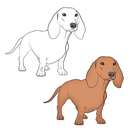 Dachshund line drawings. Standard-Bild