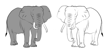 pachyderm: Line drawing of elephants - Colored and Black & White. Stock Photo