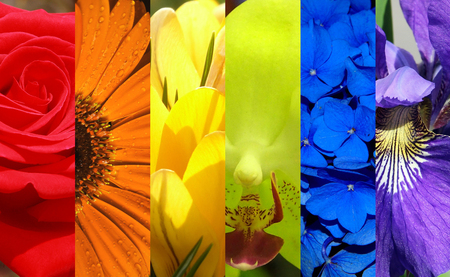 Different flowers in rainbow colors. Фото со стока