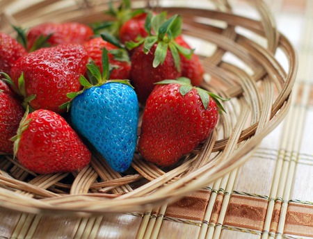 Blue strawberry among red ones.