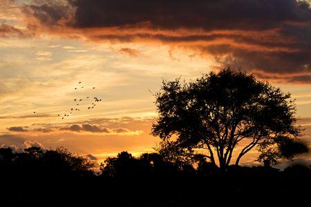 バックライトの木と美しい夕焼け 写真素材