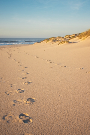 Some dunes, vegetation and footprints on a beach. Taken during sunset, the sand has a golden tone to it. photo