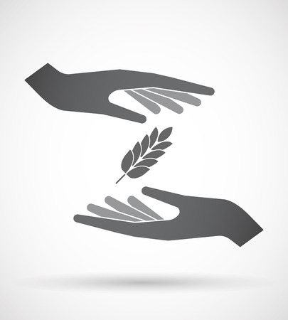 celiac: Illustration of an isolated pair of hands protecting or giving  a wheat plant icon