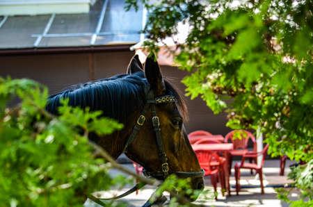 Brown horse, close-up, harnessed in bridle Reklamní fotografie