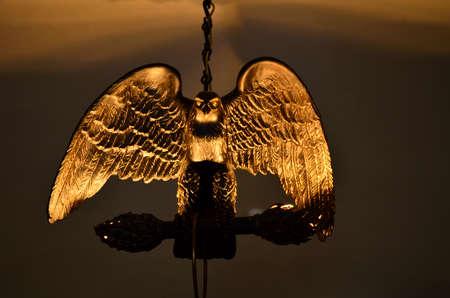 Lamp night bird profile of the light in focus