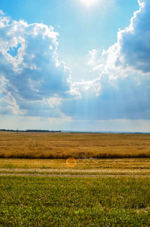 sun rays between clouds in a field with wheat Reklamní fotografie