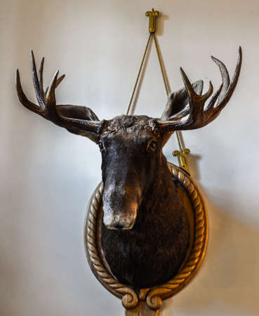 The old moose head is placed in a wooden frame