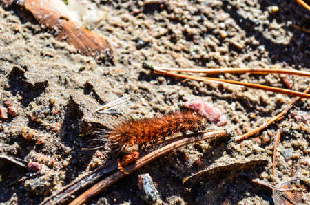 Nice background of sandy soil with crawling caterpillar