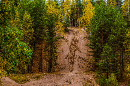 there is a sandy hill in the woods in the fall Reklamní fotografie