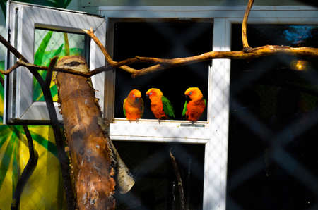 Three parrot lovebird sitting on a perch and sleep at the zoo Reklamní fotografie