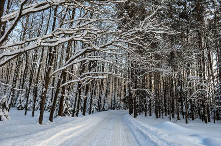 country road in winter forest in snow clear weather