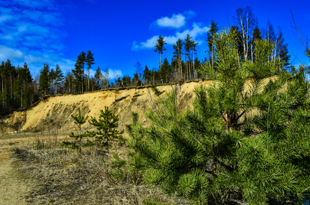 Sandy cliff in the forest in clear weather in summer