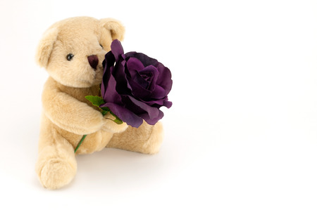 Bear hold a purple rose for an anniversary or Valentines celebration, on white background.