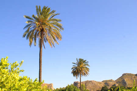warm image with lush vegetation and palm trees