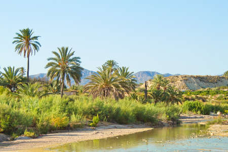 Nice tropical landscape with river and palm trees