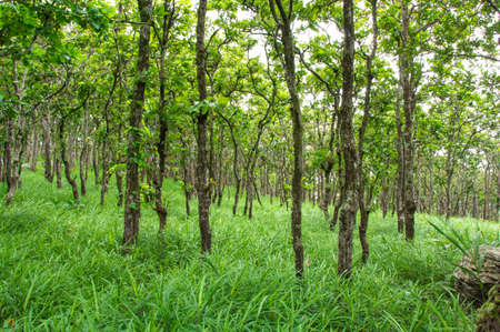 Forest greenery And a source of tourism in Thailand photo