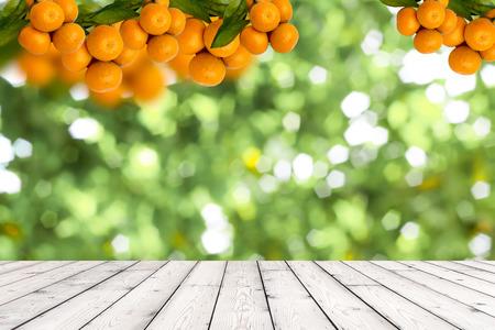naranjas: Manojo de naranjas maduras colgando de un �rbol