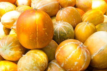 economic botany: muskmelon in the market ,Thailand - Cucumis melo