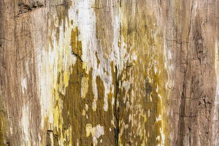 petrified: Ancient petrified wood texture background