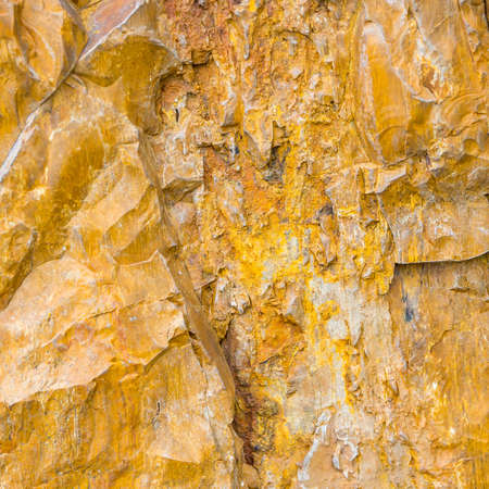 petrified fossil: Ancient petrified wood texture background