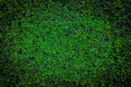 Green leaves wall texture background