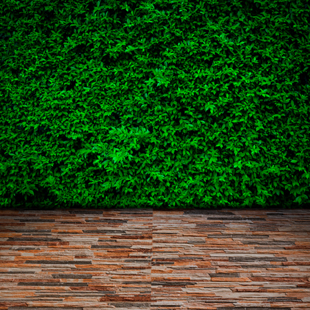 beautiful garden: Green wall texture background with stone tile floor. Stock Photo