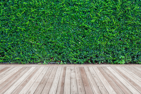 green wall: Green wall texture background with wooden floor.