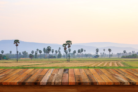 sugar palm: Empty old wooden table on sugar palm tree with rice field background. For display or montage your products.