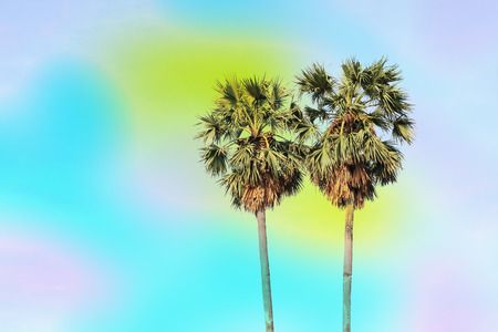 sugar palm: Silhouette sugar palm tree with sky background - vintage filter effect Stock Photo