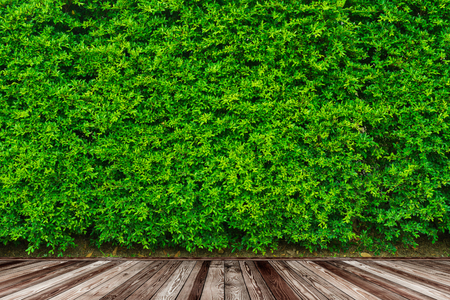 Old wood floor with green leaves wall background.