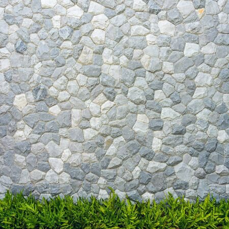 Stone wall texture with green leaves fern for background. Stock Photo
