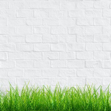 White bricks wall with green grass for background. Reklamní fotografie