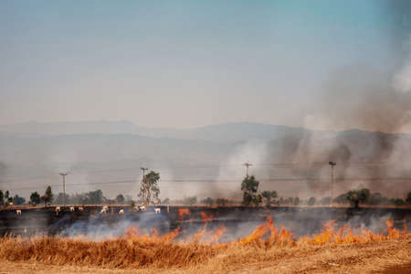 PM 2.5 air pollution problem from rice burning in rice fields by farmers.