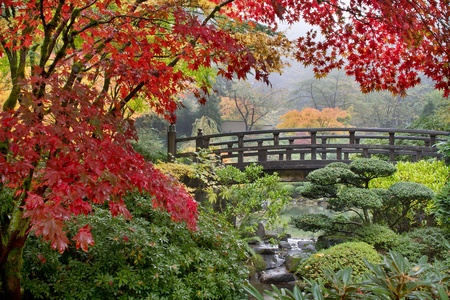 Japanese Maple Trees by the Bridge in Fall Foggy Morning Stock Photo