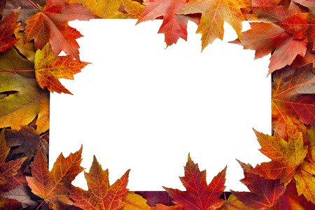 Fall Maple Leaves Border with White Background Stock Photo
