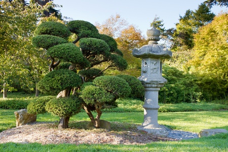juniper tree: Stone Lantern and Pruned Bonsai Tree at Japanese Garden in San Francisco