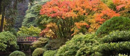 ponte giapponese: Ponte di legno del piede a giardino giapponese nel Panorama Autunno