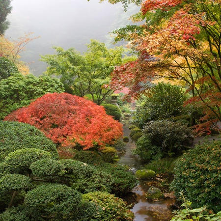 Creek at Japanese Garden One Foggy Morning in the Fall Stock Photo - 11134112
