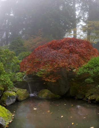 Maple Tree Over Waterfall at japanese Garden One Foggy Fall Morning Stock Photo - 11134111