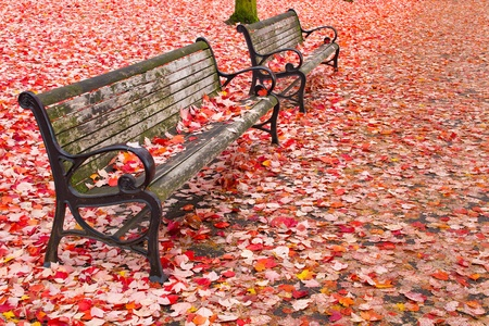 portland oregon: Park Benches in the Fall at Portland Oregon Downtown Waterfront Stock Photo