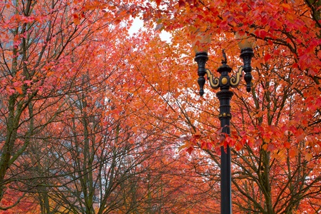 Fall Colors at Portland Oregon Downtown City Park Stock Photo - 11266652