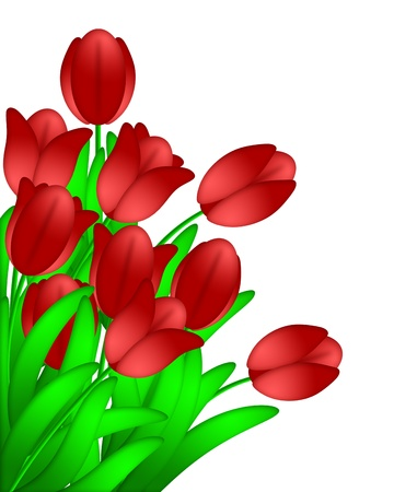 Bunch of Red Tulips Flowers in Spring Illustration Isolated on White Background illustration