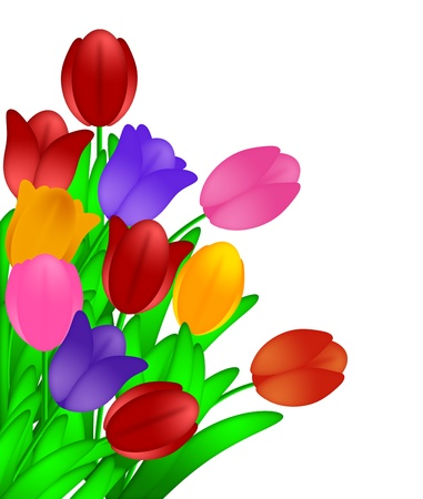 Bunch of Colorful Tulips Flowers in Spring Illustration Isolated on White Background Stock Illustration - 12683464