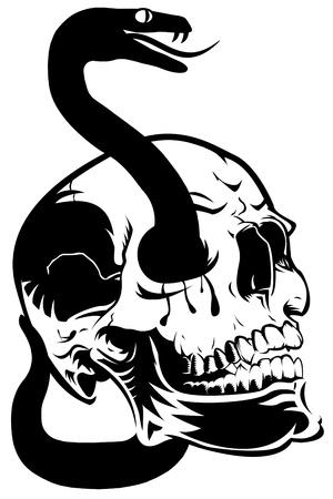 Skull with Venomous Snake Through Eyes Illustration Isolated on White Background Stok Fotoğraf