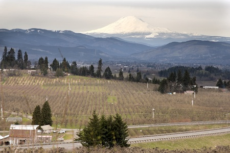 adams: Pear Orchards in Hood River Oregon with Mount Adams Stock Photo