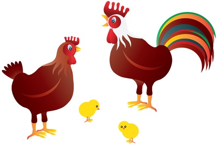 Chicken Family with Rooster Hen and Chicks Illustration Isolated on White Background