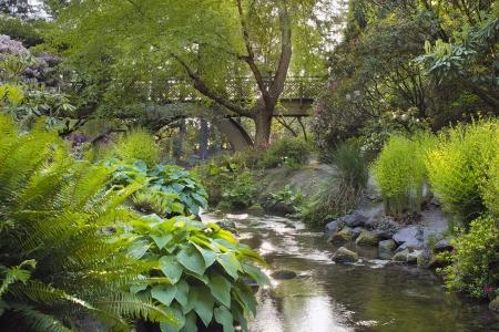 Stream Pod drewnianym moście w Crystal Springs Rhododendron Garden w Portland w stanie Oregon