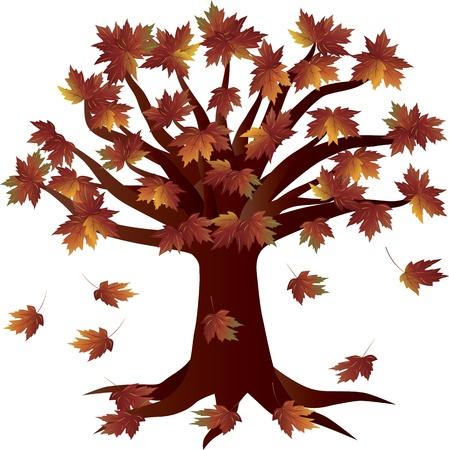 Autumn Maple Tree  in Fall Season Illustration Isolated on White Background Stock Vector - 13860521